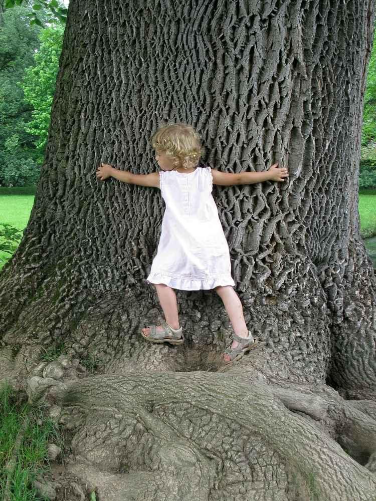 Kind umarmt einen Baum.