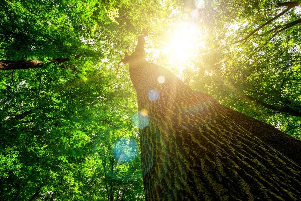 Mitten im Wand. Blick einen Baumstamm hinauf.