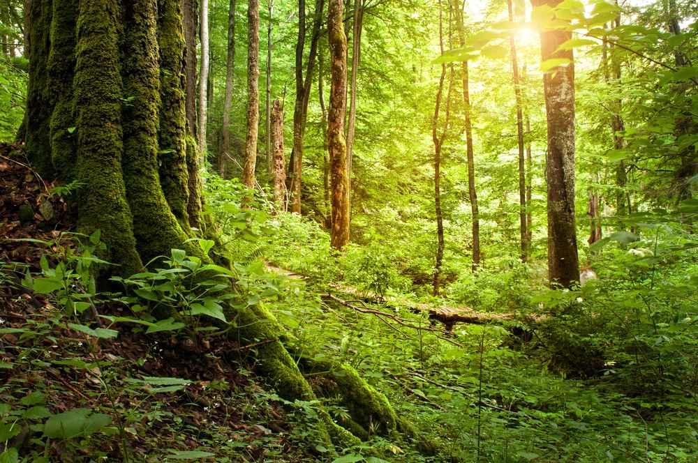 Blick in ein Waldstück.